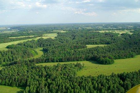 Общая характеристика лесных ресурсов Украины
