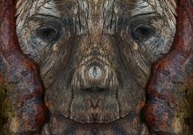 Лица деревьев
